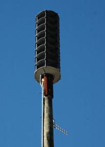 2011-03-16-plant